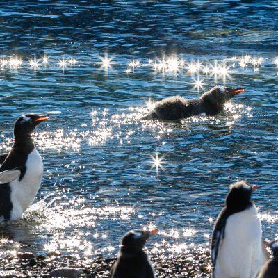 Penguins @ Antarctica